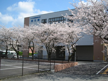 春の健生館 桜満開